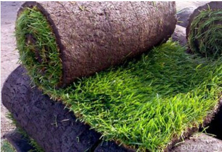 рулонный газон