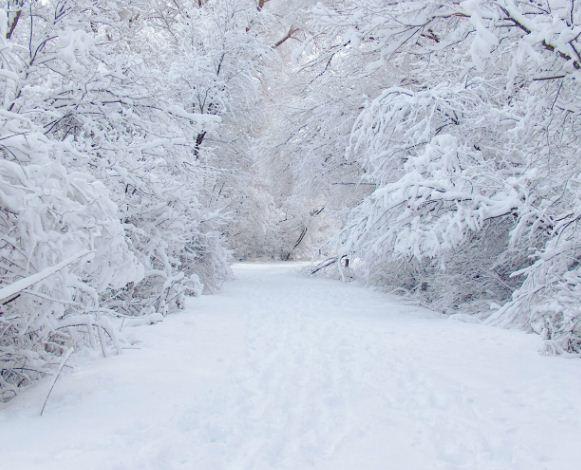 Белоснежный - цвет снега