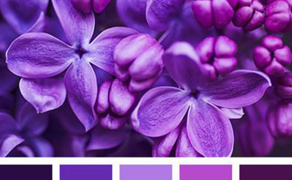 Несколько оттенков фиолетового цвета
