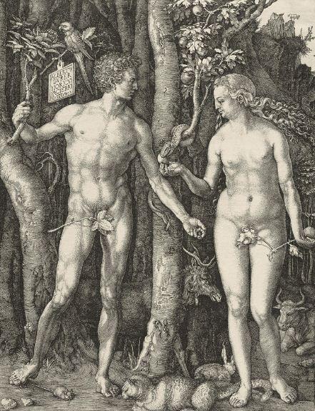 """Альбрехт Дюрер """" Адам и Ева"""" . Гравюра ( 1504 год)."""