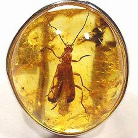 Инклюзы - доисторические насекомые в янтаре
