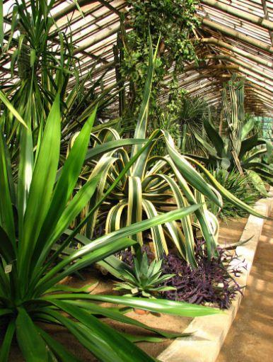 Экзотические растения в оранжерее