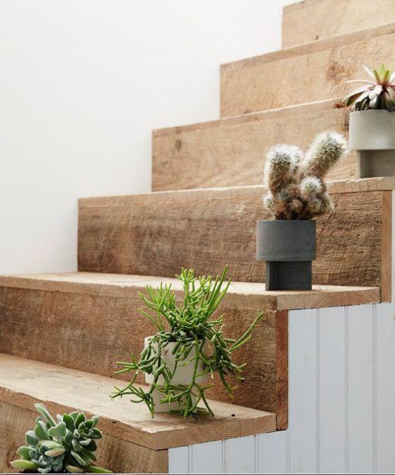 Кактусы и суккуленты украшают степени лестницы