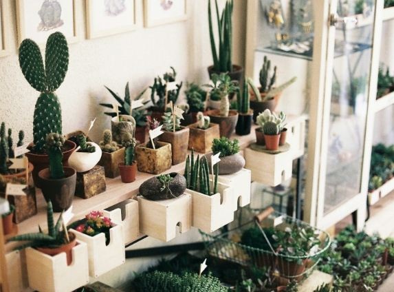 Неприхотливые растения в колючим характером