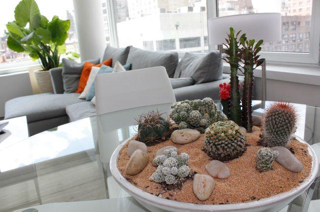 Кактусы в интерьере квартиры
