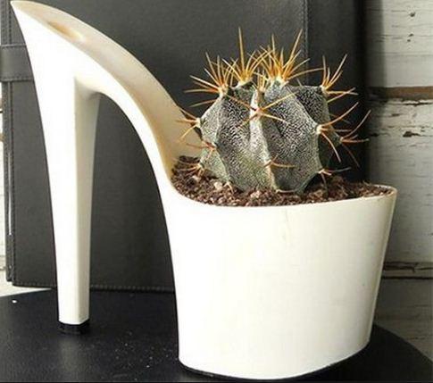 И еще один кактус в горшке - туфельке