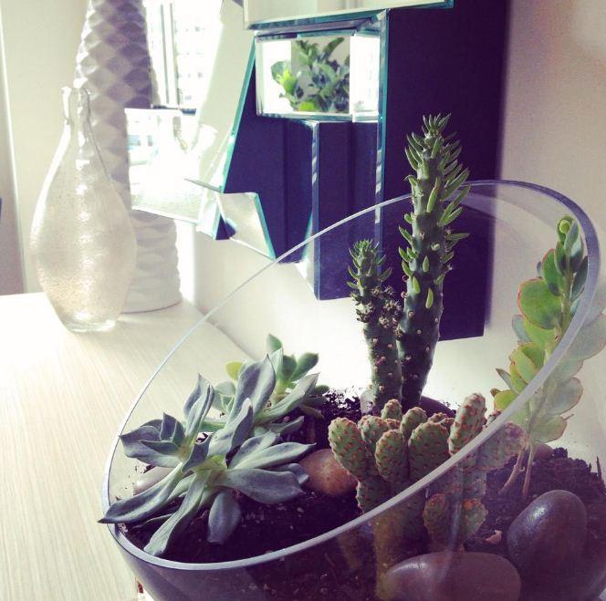 Кактусы в стеклянной емкости