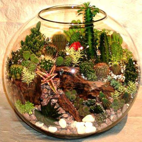 Сад из кактусов и суккулентов в аквариуме
