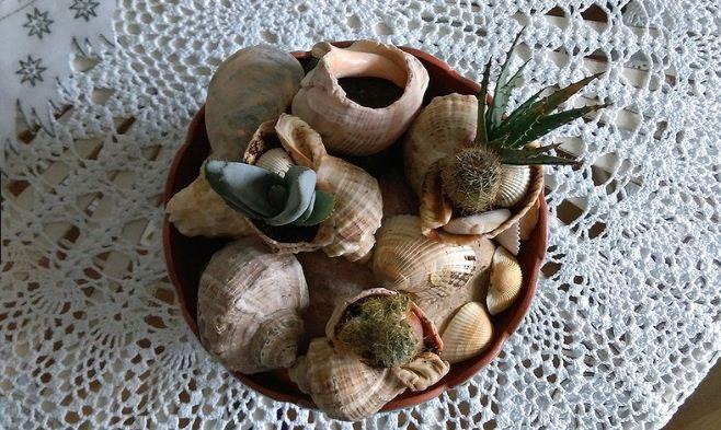 Кактусы в ракушках