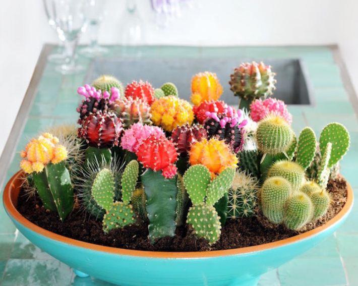 Широкое декоративное блюдо способно вместить в себя целую композицию из кактусов