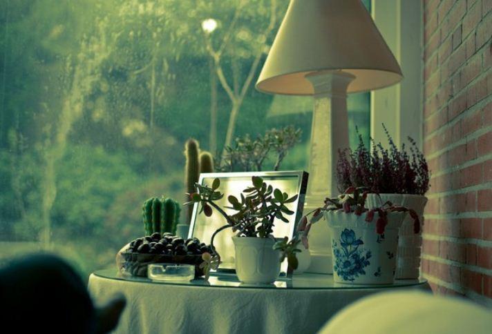 Удачное соседство кактусов с суккулентами