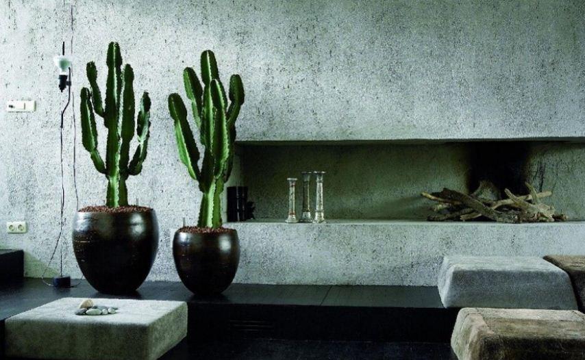 Большие кактусы в интерьере просторной комнаты