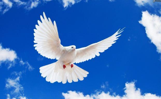Белый голубь - символ мира