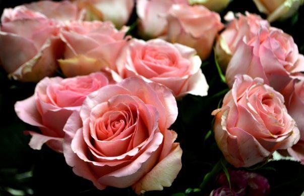 Розовые розы - это романтичный символ влюбленности