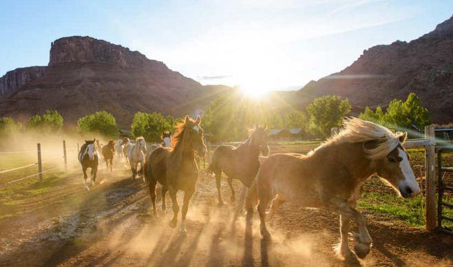 Лошади в загоне на ранчо