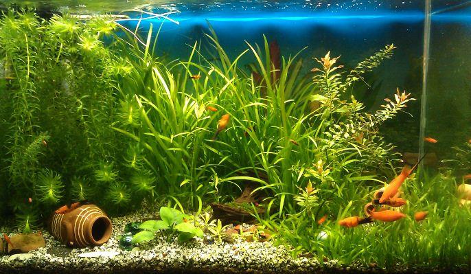 Правильное оформление аквариума
