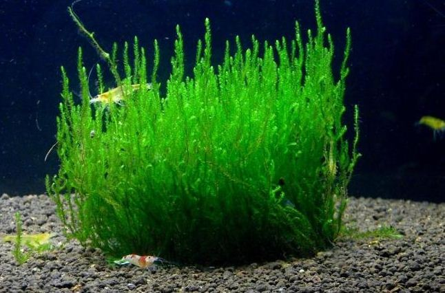Посадка водных растений и водорослей