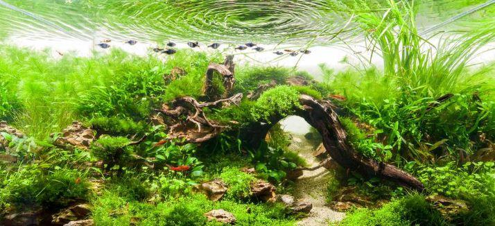 Оформление аквариума в природном стиле