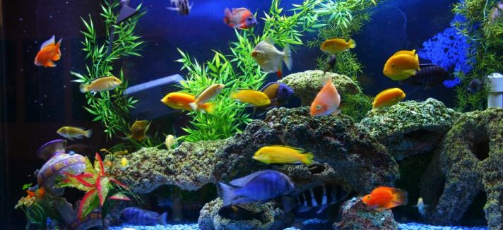 Грамотно оформленный аквариум станет настоящим украшением интерьера