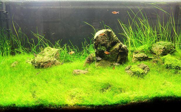 Аквариум с грунтом для высадки растений