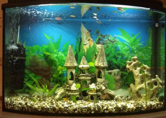Панорамный узкий аквариум емкостью 100 литров