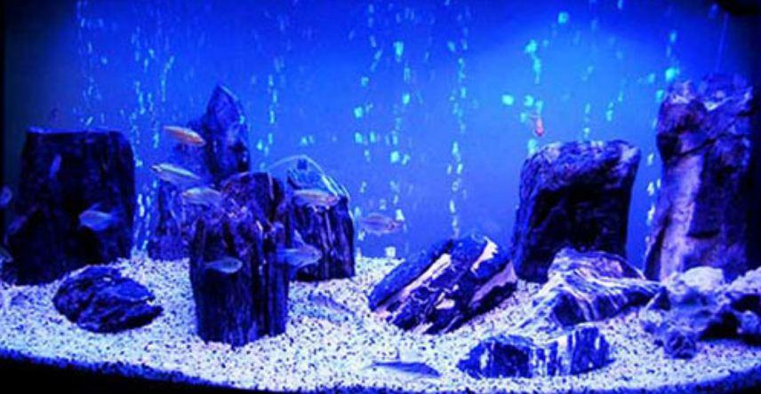 Авангардный стиль декора аквариума
