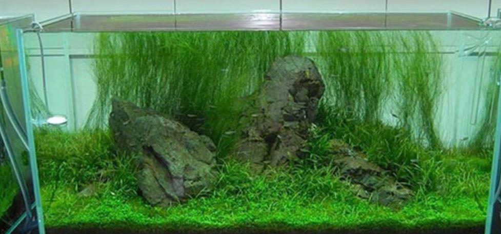 Природные пейзажи на дне аквариума