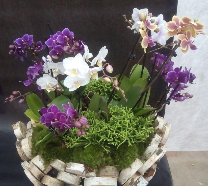 Оригинальная ваза из древесных спилов