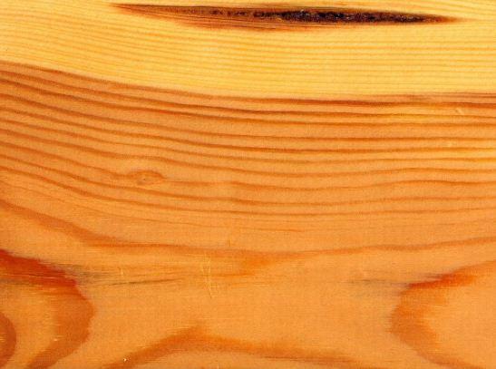 Текстура древесины сосны