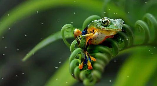 Цвет влюбленной жабы