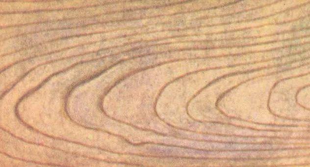 Текстура древесины клена