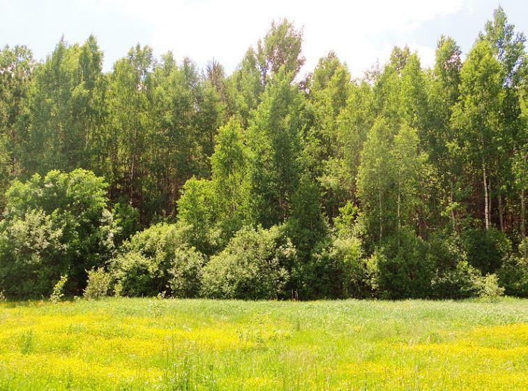 Лиственный лес в средней полосе России