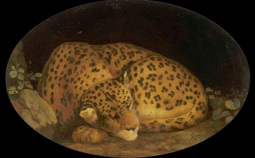 "Джордж Стаббс "" Спящий леопард"" ( 1777 год)."