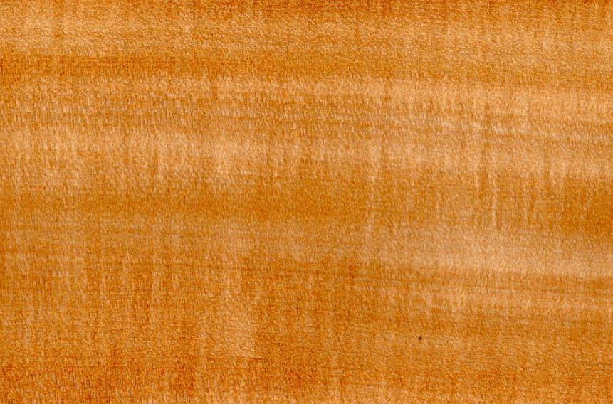 Текстура древесины липы