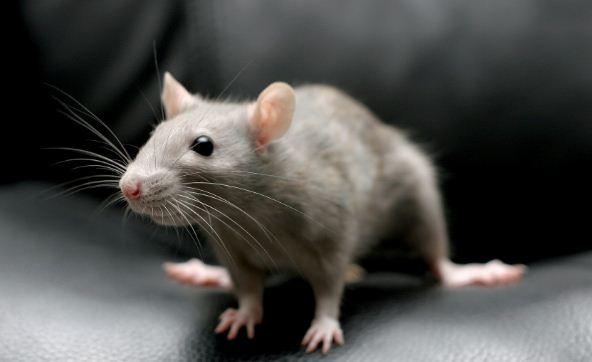 Испуганная мышь