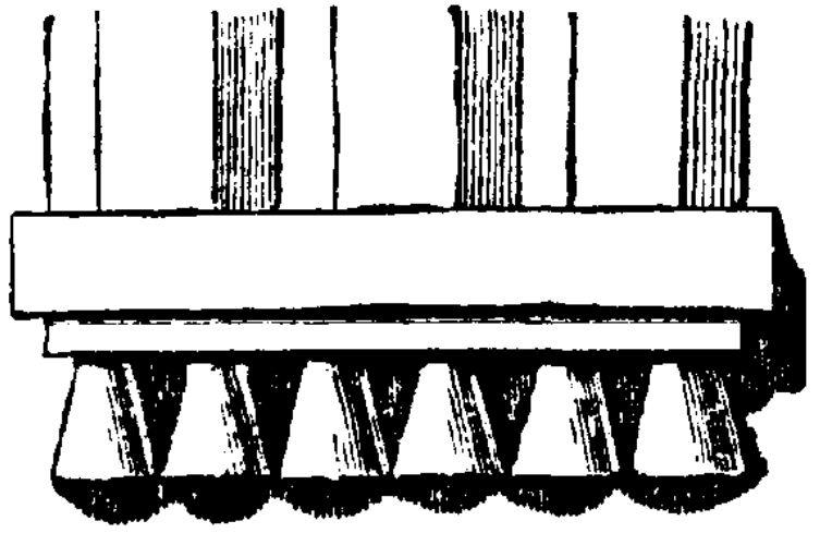 Гутты дорического ордера