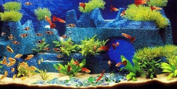 Типичное оформление аквариума в коллекторском стиле.