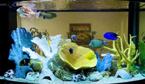 Морской аквариум с небольшими декоративным рыбками.