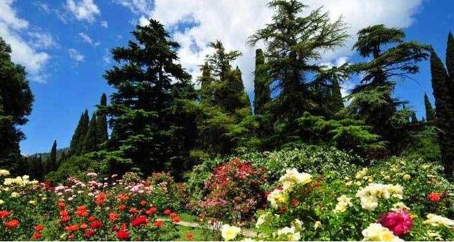 Разнообразие растительности в ботаническом саду поражает воображение.