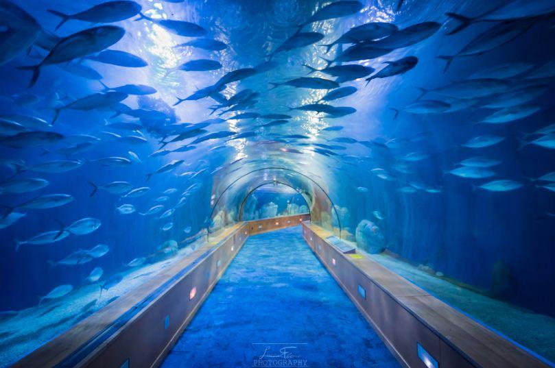 Осмотр аквариума из подводного тоннеля