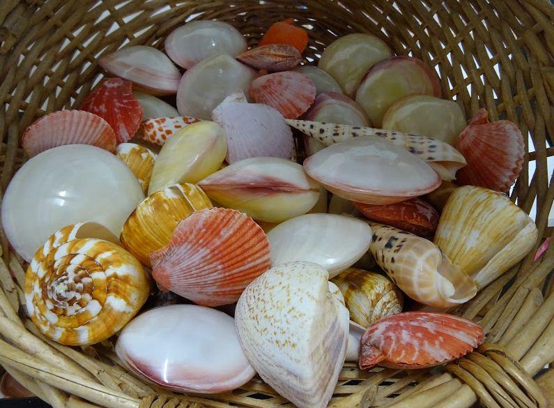 У ядовитых моллюсков самые красивые и яркие раковины