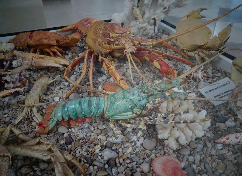 Чучела морских обитателей